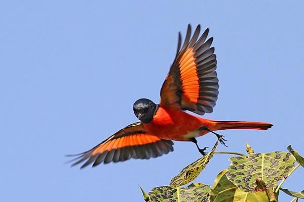 Pokhara Bird Festival